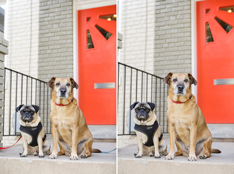 Duncan and Lincoln live on a fairly busy DC street making leashes absolutely required while shooting on their front porch.