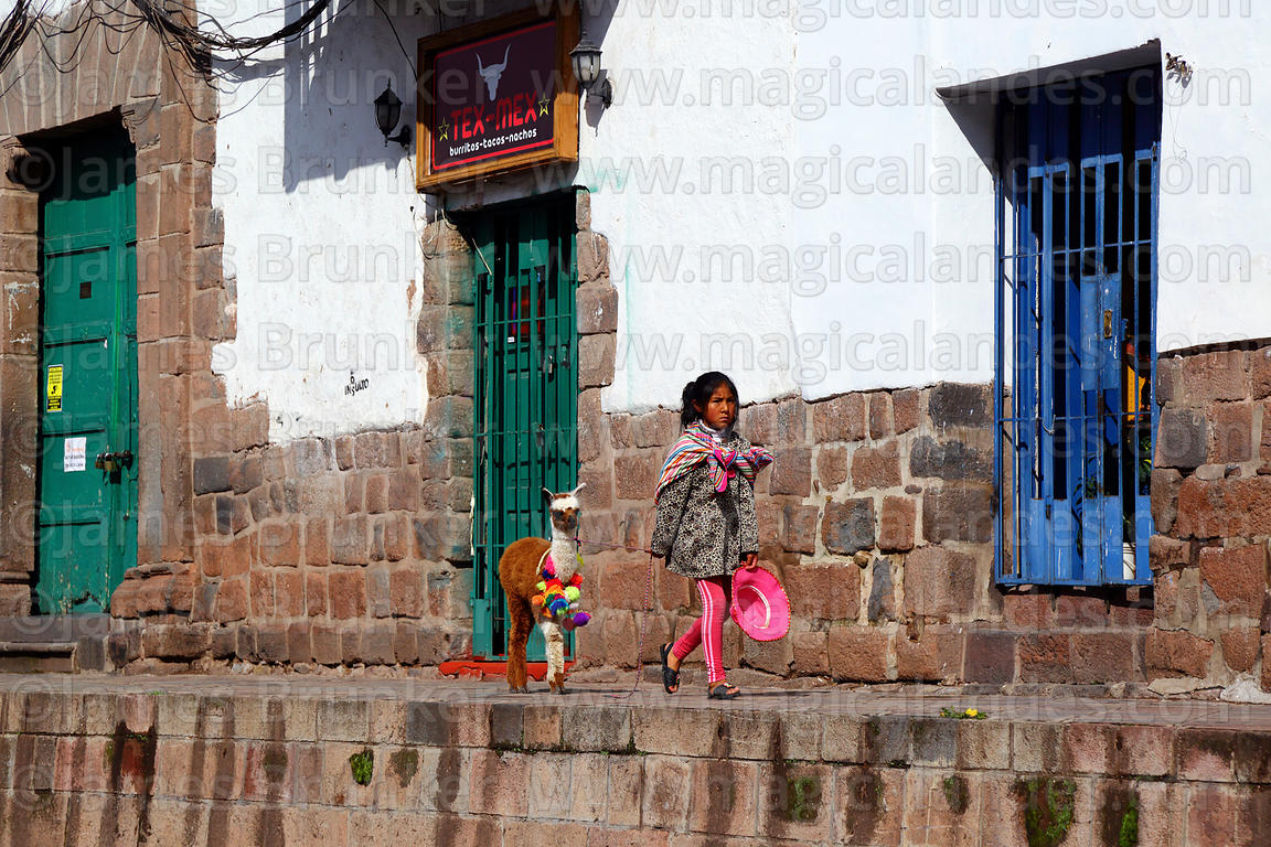 Girl with baby alpaca (Vicugna pacos) walking along street with Inca walls, Cusco, Peru