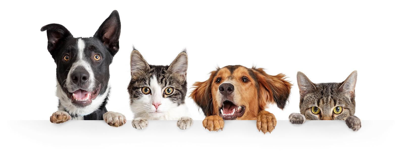 Cats-and-Dogs-Peeking-Over-White-Web-Banner