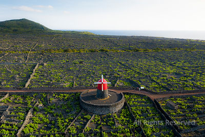 Aerial Image Showing Moinho Do Frade (frade Windmill) and Typical Vineyard Culture (viticulture) Landscape of Pico Island at ...