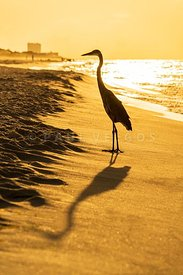 Pensacola Beach Florida Heron Sunrise Photo