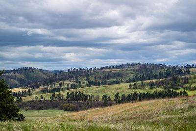 An overlooking landscape view of Custer State Park, South Dakota