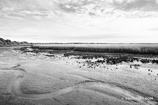 SPARTINA SALT MARSH WINTER CUMBERLAND ISLAND GEORGIA BLACK AND WHITE