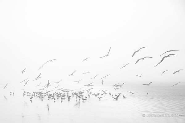 FLYING BIRDS CUMBERLAND ISLAND GEORGIA BLACK AND WHITE