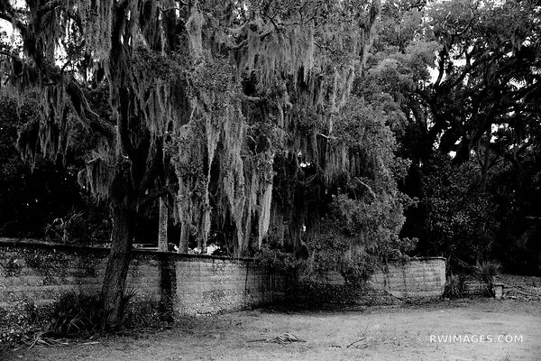 TREES SPANIS MOSS DUNGENESS CUMBERLAND ISLAND GEORGIA BLACK AND WHITE