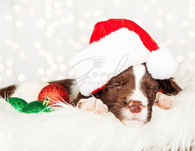 Puppy Wearing Santa Hat While Napping On Fur At Home