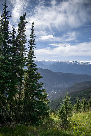 Forest and cloudscape, Blackcomb Mountain, Whistler, Canada.