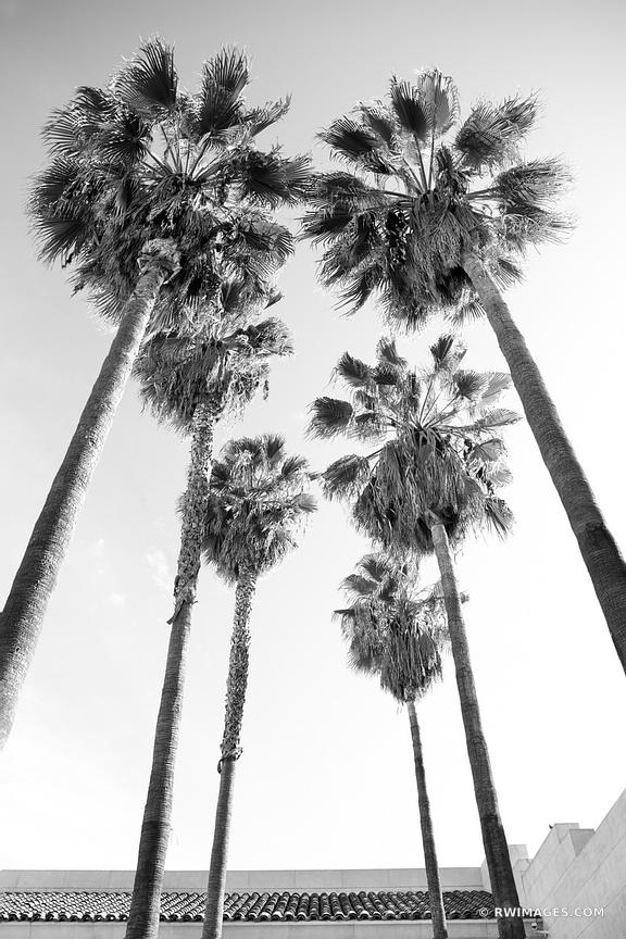 PALM TREES HOLLYWOOD CALIFORNIA BLACK AND WHITE VERTICAL