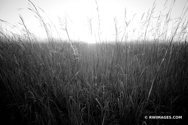 TALLGRASS PRAIRIE BLACK AND WHITE