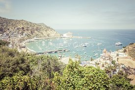 Santa Catalina Island Avalon Bay Picture