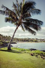 Maui Hawaii Wailea Beach Palm Tree Photo