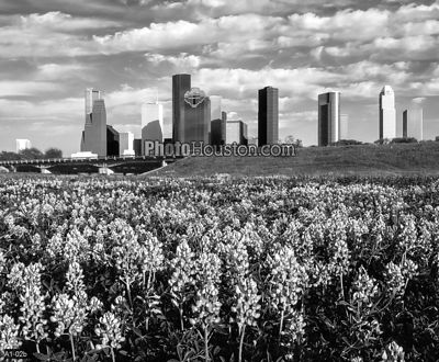 Houston city skyline and Bluebonnets