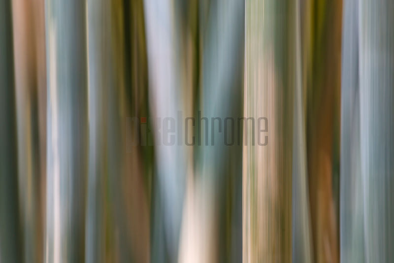 Intentional Camera Movement of Bamboo Forest