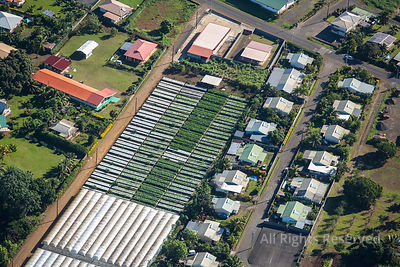 Agriculture on Tahiti Tropical Islands of French Polynesia