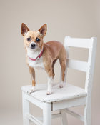 Dog on chair
