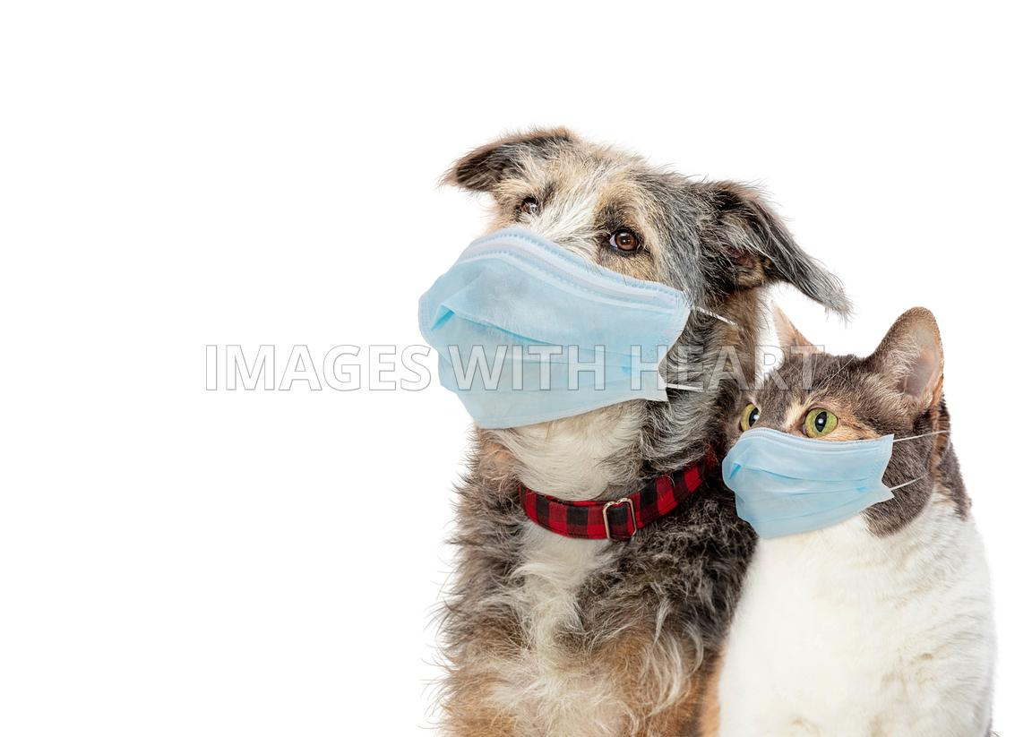 Closeup Cat and Dog Wearing Protective Face Masks