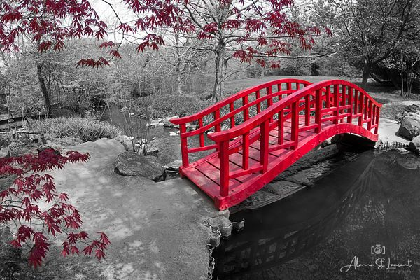 Cranbrook_Japanese_Bridge_Selective_Color