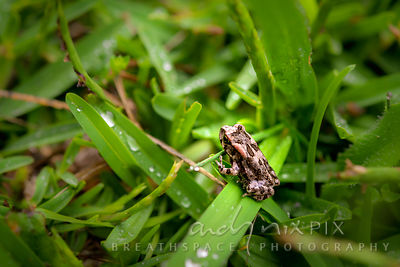 Miniature frog on a blade of grass