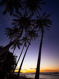 Tropical Beach with Palm Trees at Sunset
