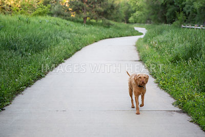 Dog_Walking_On_Path