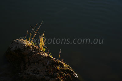 Close-up of grass on Murray River bank.
