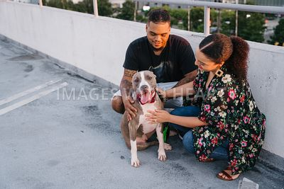 Pit Bull and Family in City on Parking Deck Roof