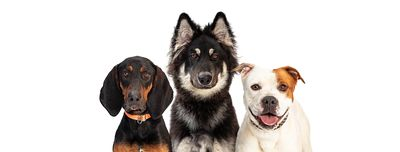 Three Large Dogs Web Banner Copy Space