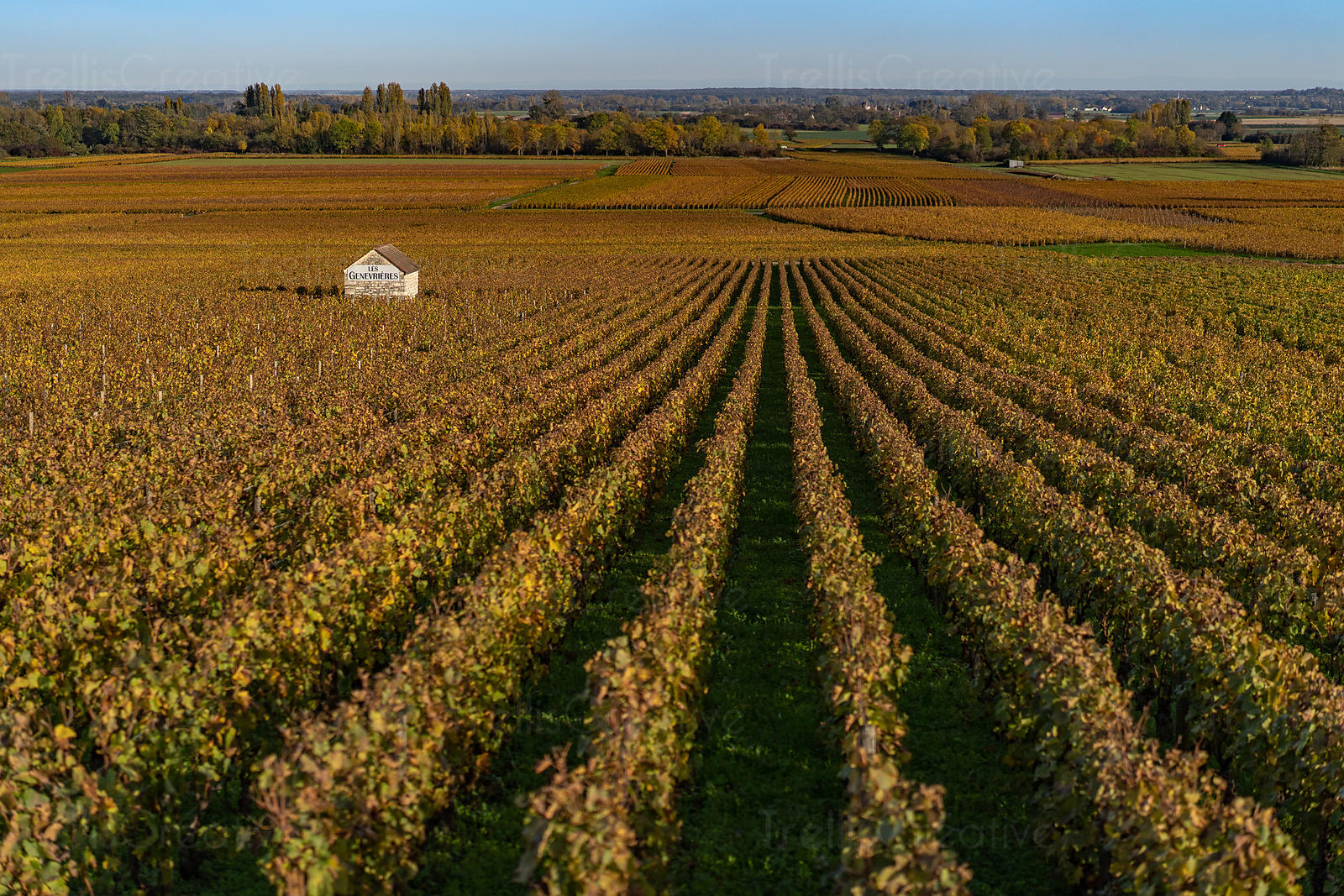 The beautiful vineyards of Meursault in Burgundy, France
