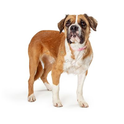 Cute pet crossbreed dog standing isolated