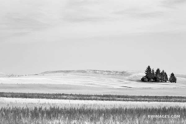 PALOUSE FARMLAND RURAL EASTERN WASHINGTON BLACK AND WHITE LANDSCAPE