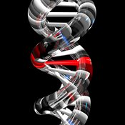 DNA Mutation Glassy Helix Perspective