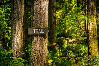 Trail sign in the forest.