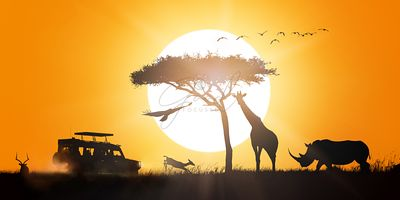 African Safari Sunset Silhouette Scene