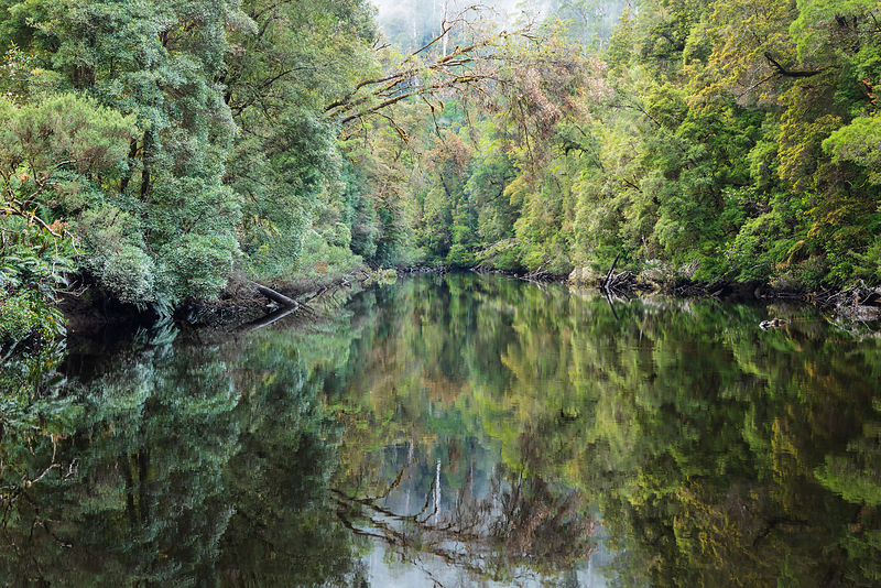 Spring Reflections in the Tarkine Wilderness