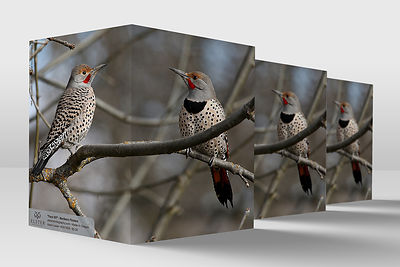 NorthernFlickers