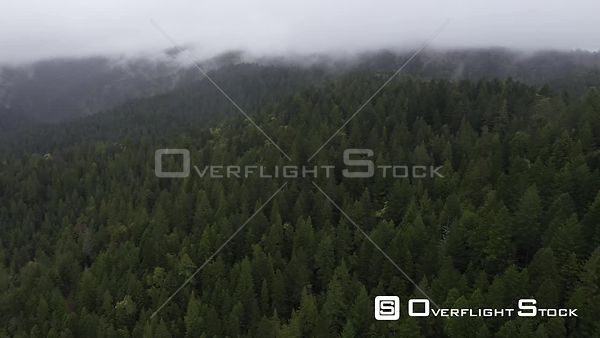 Drone Flight Over Avenue of the Giants Humboldt Redwoods State Park On a Misty Day California