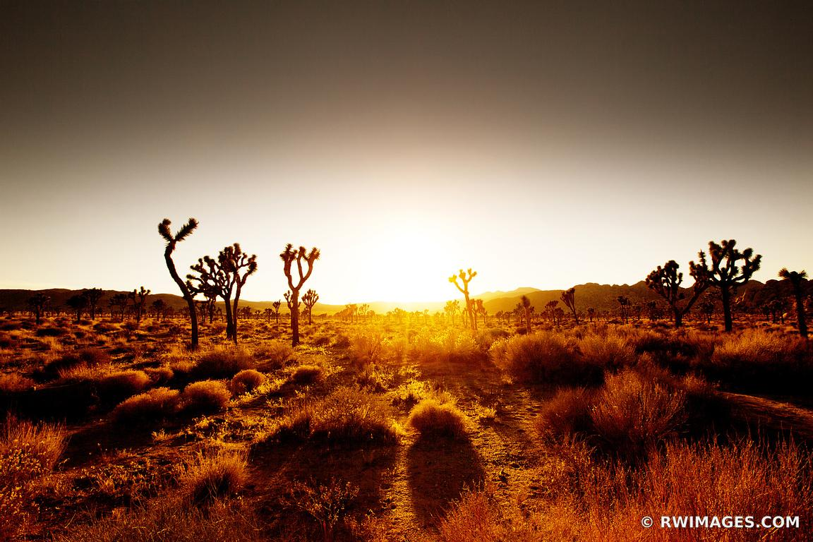 SUNSET JOSHUA TREE NATIONAL PARK CALIFORNIA COLOR