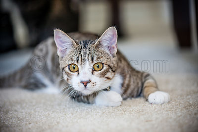 DH_Cats-0676