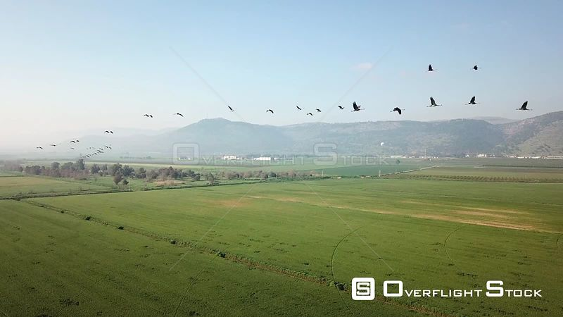 Flying with Common Cranes in Hula Valley Israel