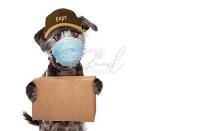 Funny Dog Delivering Package Wearing Face Mask