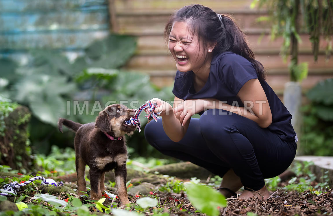 Puppy playing tug with laughing woman