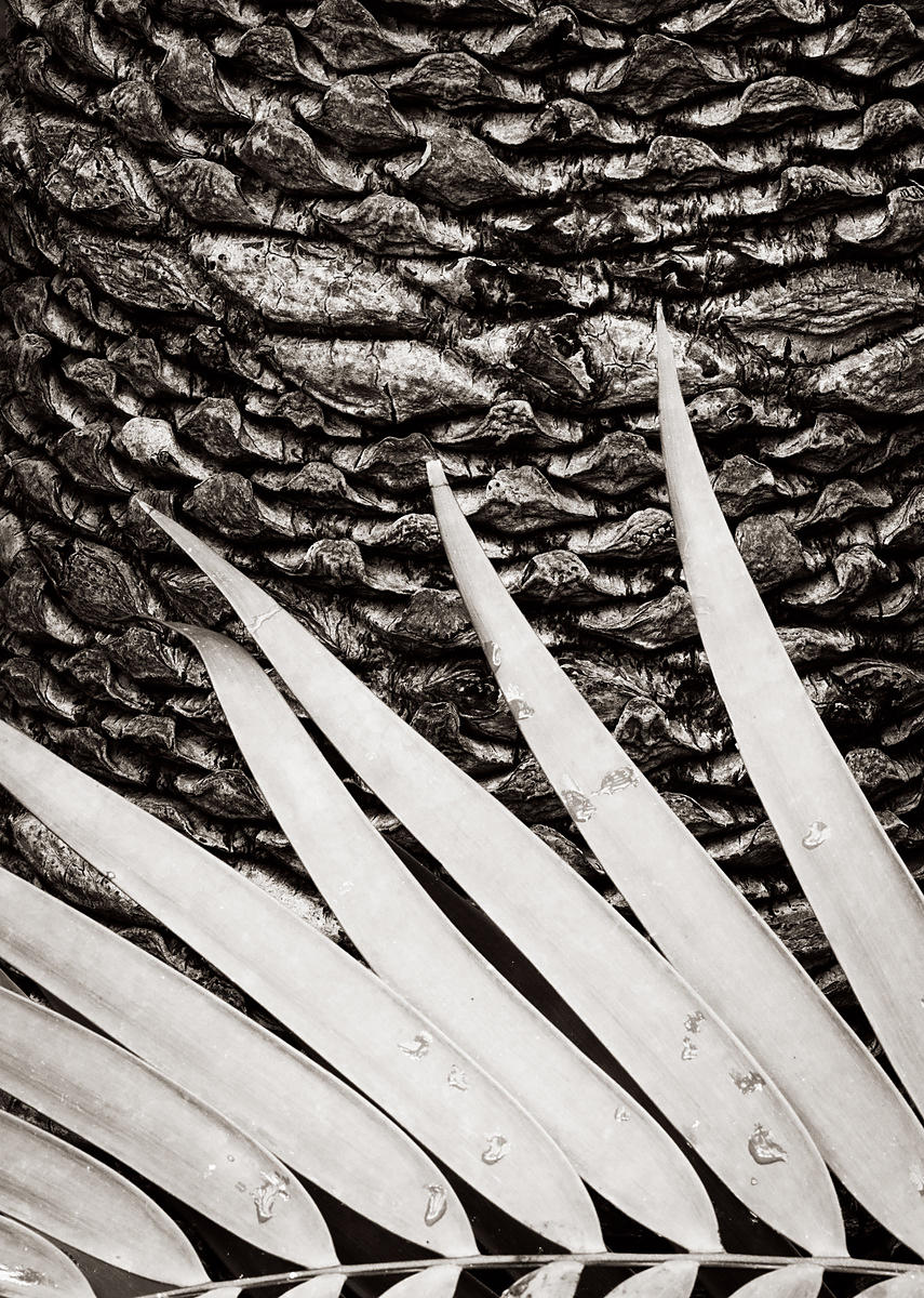 Palm fronds and trunk