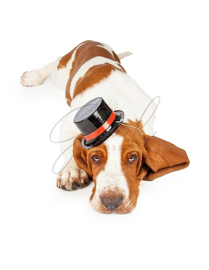 Cute and Adorable Basset Hound Dog Wearing Top Hat