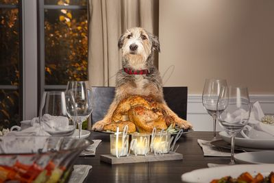 Dog Serving Thanksgiving Day Turkey