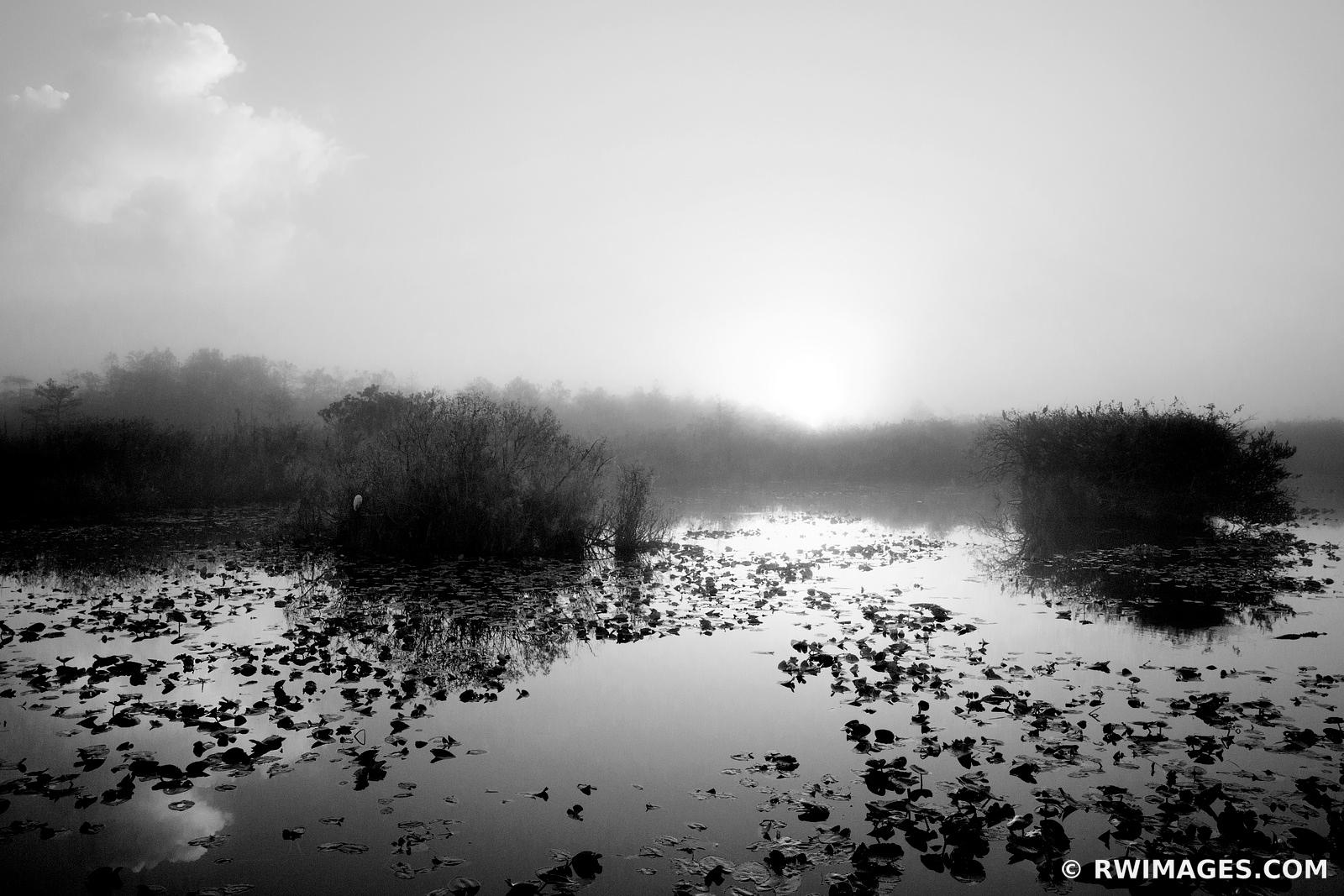 SUNRISE ANHINGA TRAIL EVERGLADES NATIONAL PARK FLORIDA BLACK AND WHITE