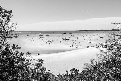 'South Beach Seal' b&w
