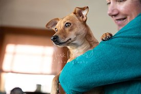 Close-up of Red Chihuahua Mix in Woman's Arms