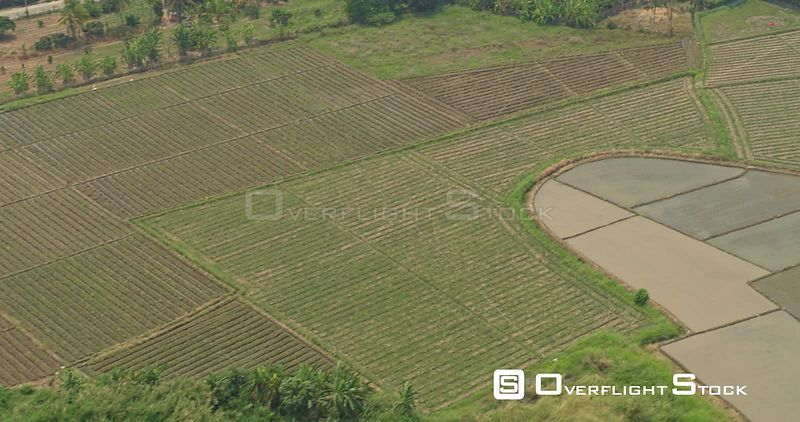 Thung Pi Thailand Aerial Ascending birdseye to descending birdseye to panning view of crops