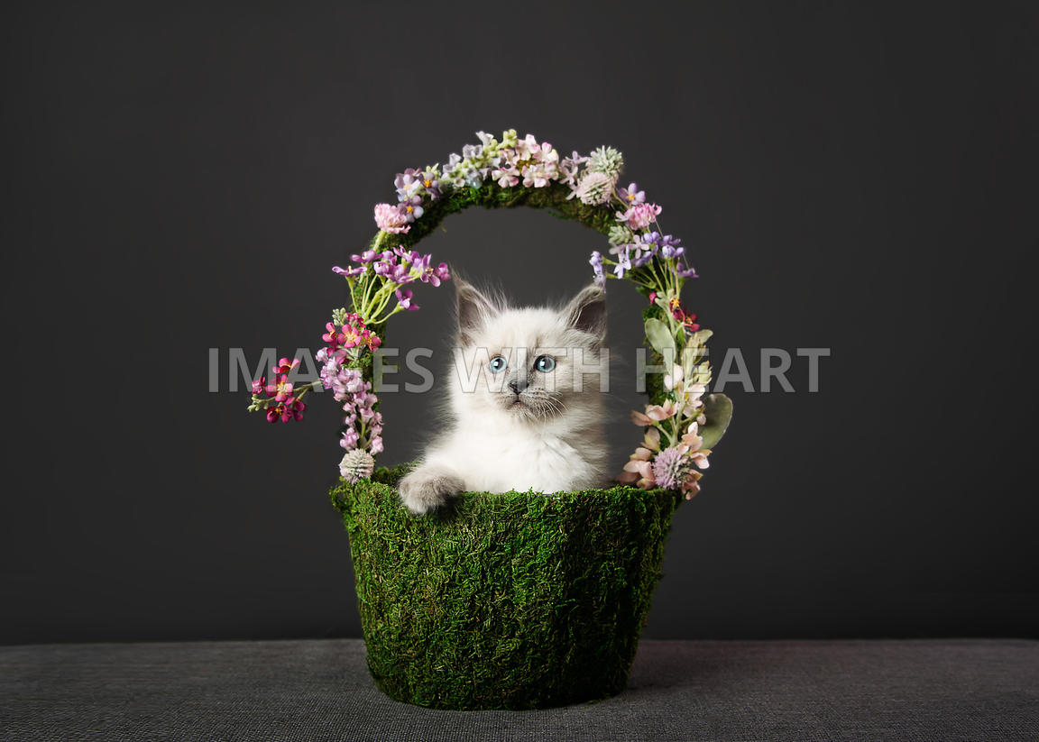 Kitten in Spring Basket