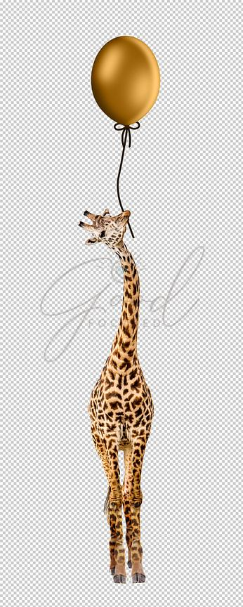 Giraffe Holding Helium Balloon in Mouth